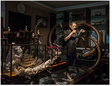 Chen Shu, the president of the China Association of Mammoth Ivory Art Research, has a large collection of mammoth ivory carved objects and tusks at his Beijing apartment