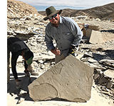 Anthony with a newly discovered fossil bird in his quarry near Kemmerer, Wyoming