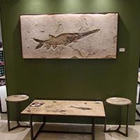 Yurie Larson, Larson Paleontology